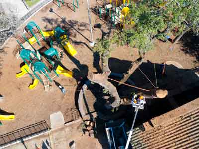 Services | Commercial & Residential | Certified Arborist